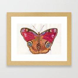 Big Eyes Butterfly Junonia Almana Framed Art Print
