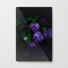 Hydrangea 03 Metal Print
