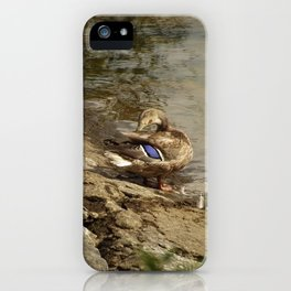 Summer Mallards iPhone Case
