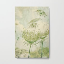 Sanctuary -- White Queen Anne's Lace Meadow Wild Flower Botanical Metal Print