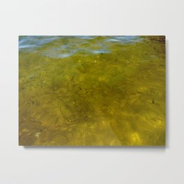 Golden Greenies Metal Print