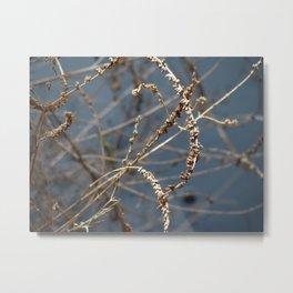 Lake Weed Metal Print