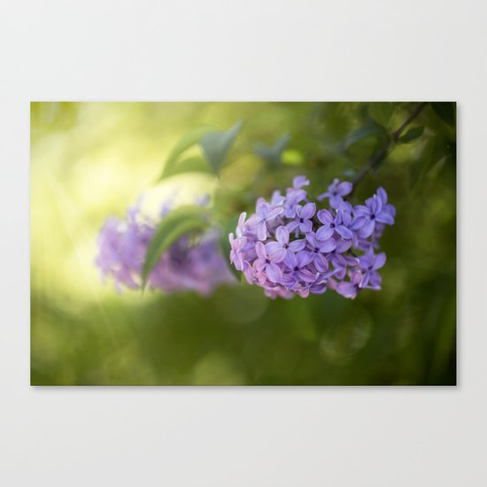 Lilac syringa in LOVE - Spring Tree Flower photography Canvas Print