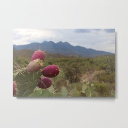 Prickly Pear Near Four Peaks, AZ Metal Print
