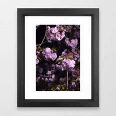 Goodnight Sakura  Framed Art Print