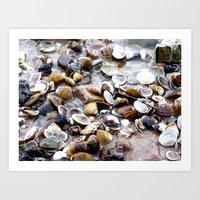 shells Art Prints featuring Shells by Anne Seltmann