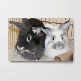 Twin Rabbits Metal Print
