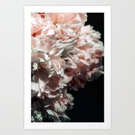 Pink Peony #3 Art Print
