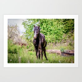 Dark bay horse Art Print