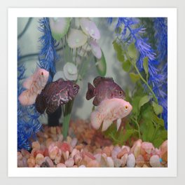 Two Black and Two White Oscars in an Aquarium Art Print