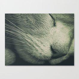 Nap Time Canvas Print
