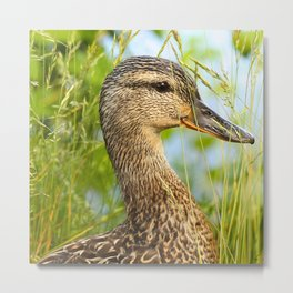 Wild Duck Portrait Nature Background #decor #society6 #buyart Metal Print