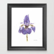 Siberian Iris Framed Art Print