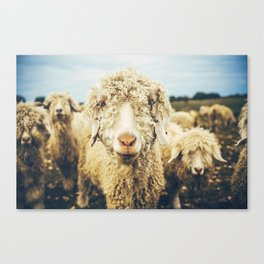 Curly I Canvas Print