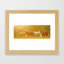 Horses @ Sunset Framed Art Print