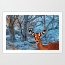 Impala Winterland Art Print