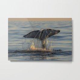 Orca Sunset Tail Slap Metal Print