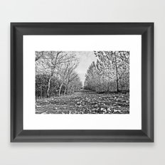 Pathway through the trees Framed Art Print