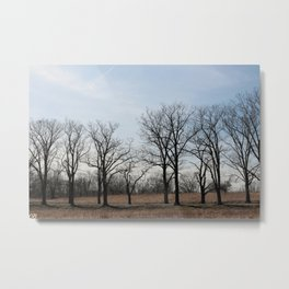 Tree row.  Metal Print