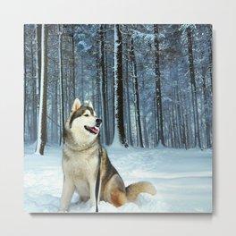 Little Wolf Metal Print