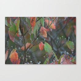 Fall in PA Canvas Print