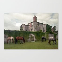 Cumberland Island - Feral Horses Canvas Print
