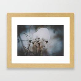 _DSC7058 Framed Art Print