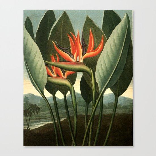Birds of Paradise : Temple of Flora Canvas Print