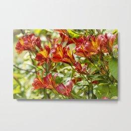 Red Flora Metal Print