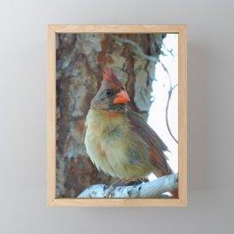 Beautiful female cardinal Framed Mini Art Print