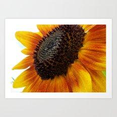 sun flower macro Art Print