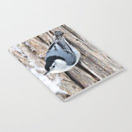 White-breasted Nuthatch Notebook