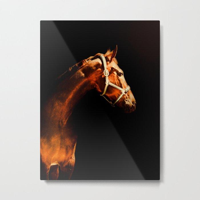 Horse Wall Art, Horse Portrait Over a Black background, Horse Photography, Closeup Horse Head Metal Print