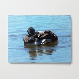 Preening time Metal Print
