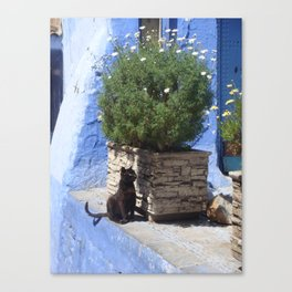 black cat in the city Canvas Print