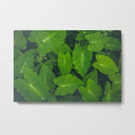 Beautiful green leaves in macro Metal Print