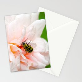Cucumber Beetle & Winter Rose Stationery Cards