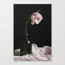 Wilted Pink Rose Canvas Print