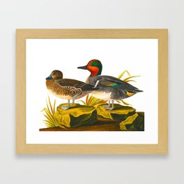Green winged Teal James Audubon Vintage Scientific Illustration American Birds Framed Art Print