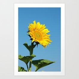 Sunflower-Bright Day Art Print