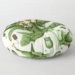 hyoscyamus niger (black henbane or stinking nightshade) - Vintage botanical illustration Floor Pillow