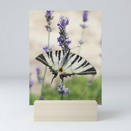 Swallowtail Butterfly On Lavender Mini Art Print
