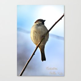 Little Sparrow Canvas Print