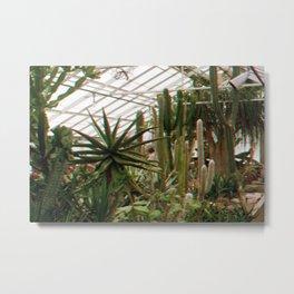 Cactus Haze Metal Print
