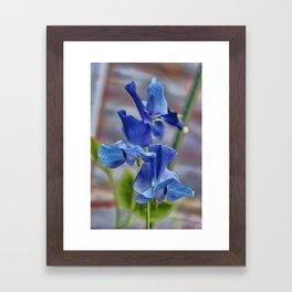 Sweet Pea Flower Framed Art Print