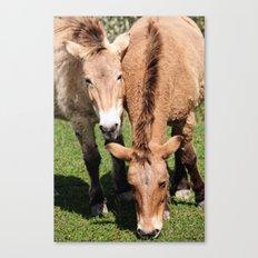 Przewalski Horses Canvas Print