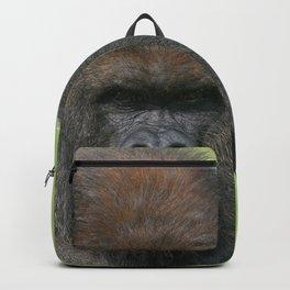 Gorilla Gaze Backpack