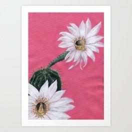 Echinopsis Art Print