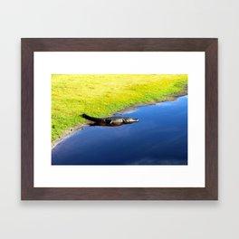Relaxing Alligator Framed Art Print