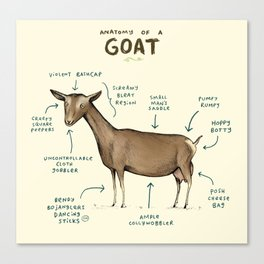 Anatomy of a Goat Canvas Print